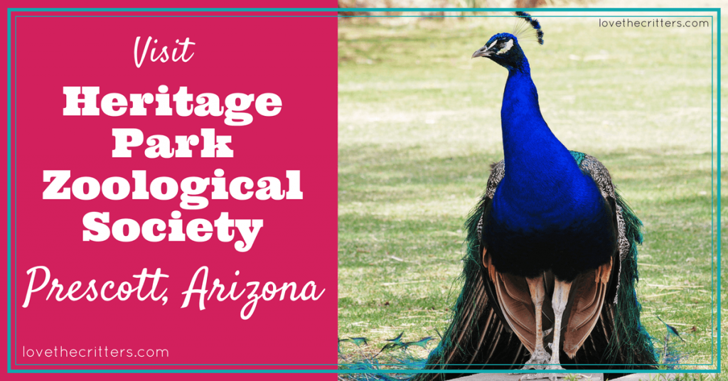Heritage Park Zoo Prescott Arizona - Love The Critters