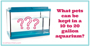 What pets can be kept in a 10 to 20 gallon aquarium?