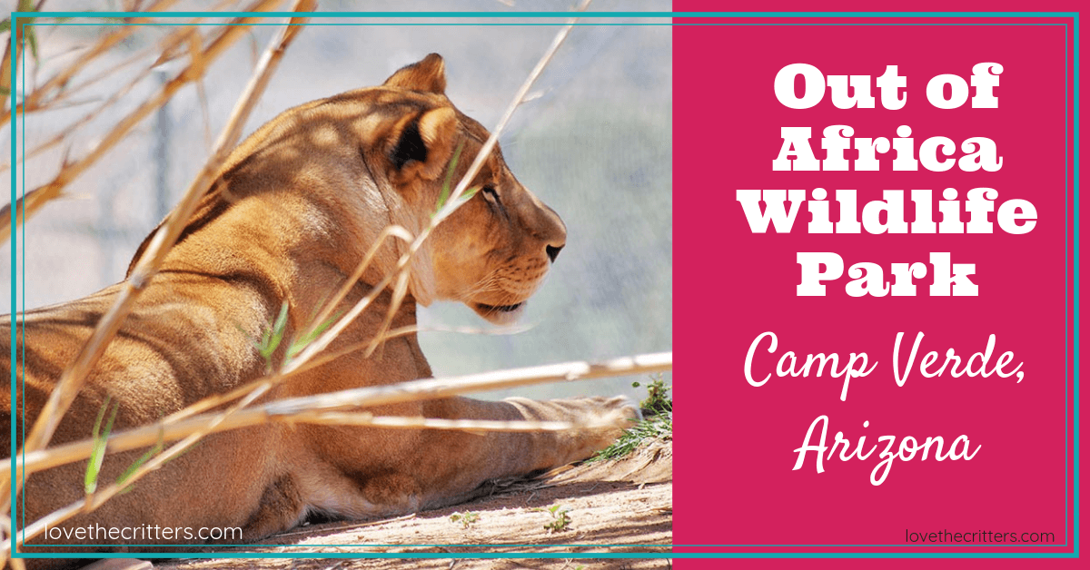 Out of Africa Wildlife Park, Camp Verde, Arizona - Love the Critters