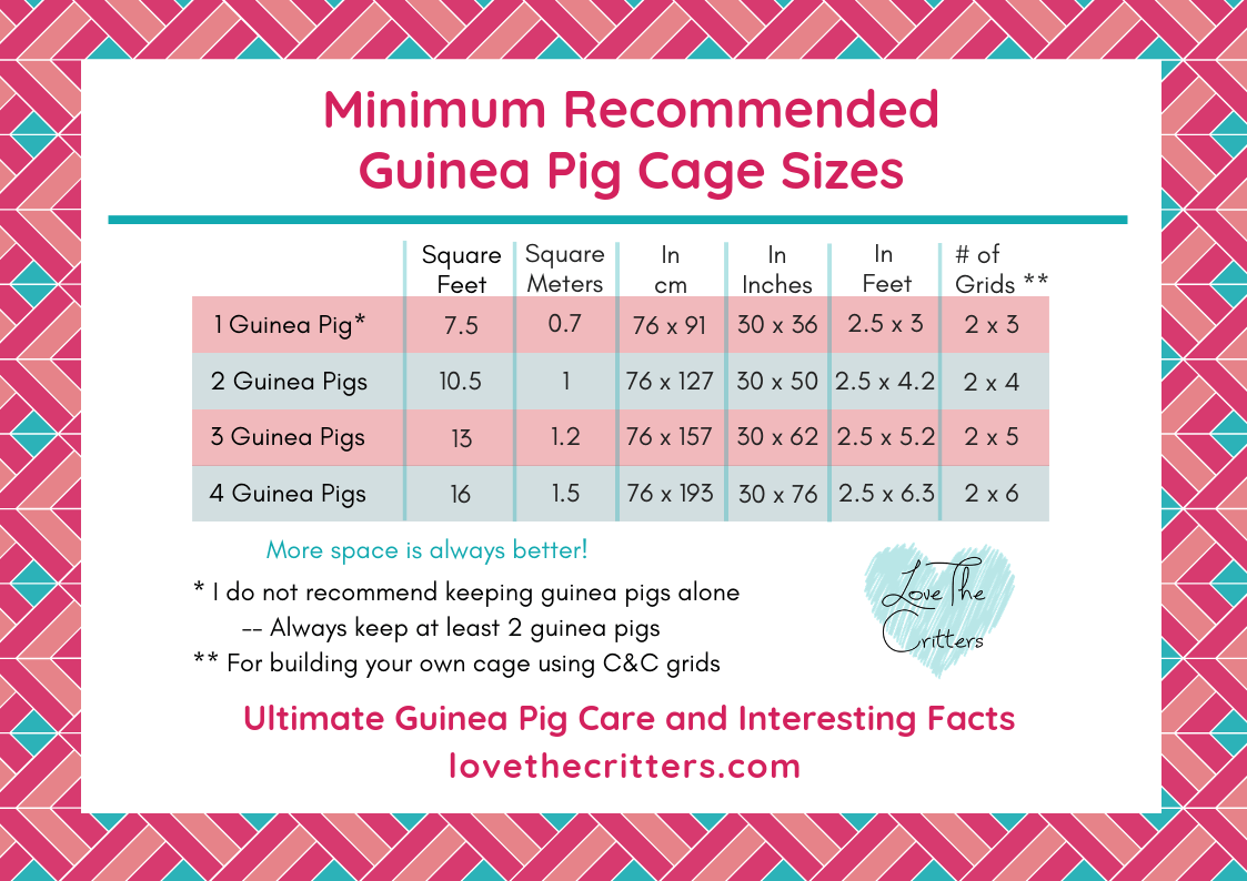 Recommended Minimum Guinea Pig Cage Sizes