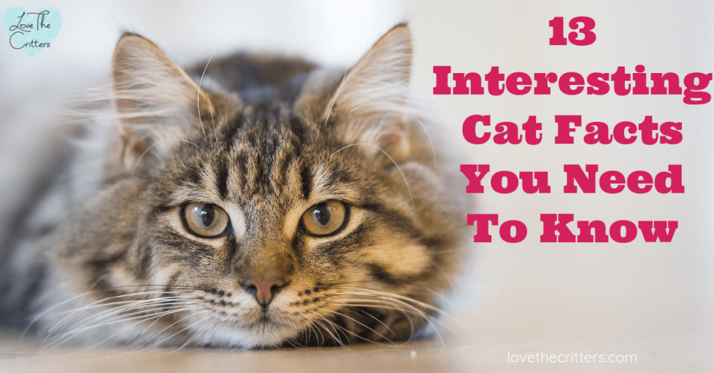 13 interesting cat facts and tips you need to know, weird truths, health facts #cats #catfacts #interesting