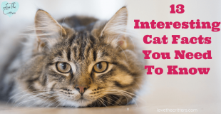 13 Interesting Cat Facts You Need To Know