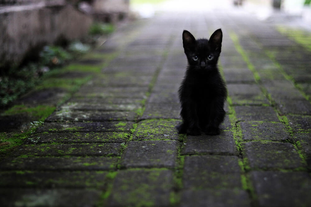 Tiny black kitten - 13 interesting cat facts and tips you need to know, weird truths, health facts #cats #catfacts #interesting