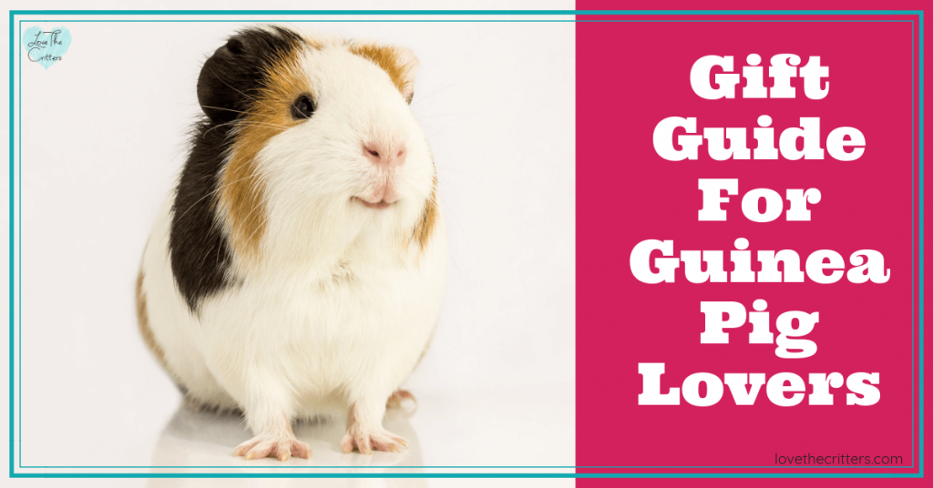 Guinea pig gift ideas for guinea pig lovers and owners. Awesome gifts for any holiday, birthdays, Mother's Day, Father's Day Valentines Day, Christmas, or any day! Unique and awesome guinea pig gifts #guineapig