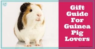 Gift Guide For Guinea Pig Lovers