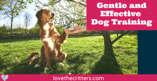 Gentle and Effective Dog Training