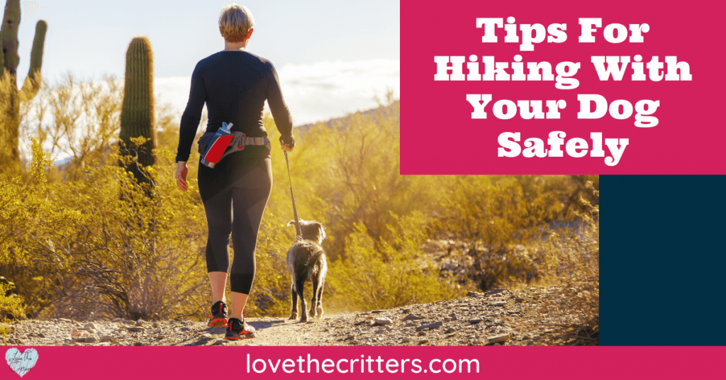 Tips for hiking with your dog safely
